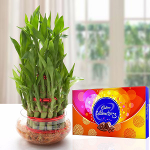 Celebration Three Layer Bamboo Plant