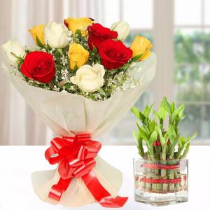 Lucky Bamboo & Mixed Roses Combo