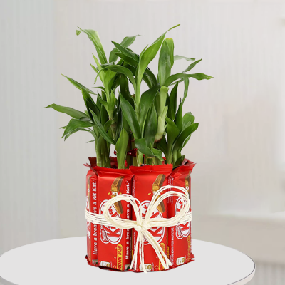 Lucky Bamboo with Kit Kat Chocolates